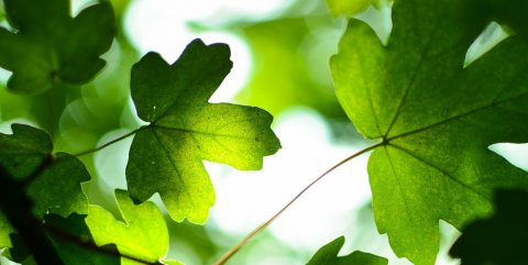 CiviCRM Hosting leaf plan